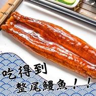 【鮮綠生活】頂級直輸日本整尾蒲燒鰻魚片(共25包)