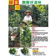 邱爸爸自然農法-無毒檸檬之無籽檸檬-可作檸檬汁蜂蜜檸檬水檸檬酵素入菜用