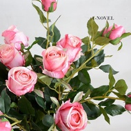 ♚♚稀有新品☬♟種子特賣☬玫瑰花種孑白玫瑰花種籽子紅黑四季庭院梅桂花玫瑰花種玫瑰花種子ஐஐ限時上架出售☤☧