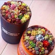 succulent plants 100ชิ้น / แพ็ค พืชอวบน้ำ ต้นไม้ประดับ เมล็ดพันธุ์ ไม้ประดับ plants ต้นไม้ตกแต่ง เมล็ด พันธุ์ไม้หายาก ต้นไม้หายาก ของตกแต่งในสวน สามารถปลูกได้ทั่วประเทศไทย ต้นไม้ประดับสด เมล็ดต้นบอนสี ดอกไม้ ทำสวน ของแต่งบ้านสวน แต่งบ้านและสวน จัดสวน สวน