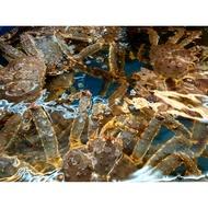 東華水產 生猛 活體帝王蟹 活體鱈場蟹極速 24h出貨  不出門 也能吃好料! 好評不斷