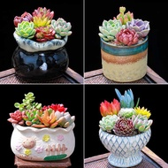 succulent plant seeds plant seeds succulent pot succulent soil succulent planter ☼Succulents Combination Small Potted No
