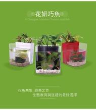 [第一佳 水族寵物] 花魚共生寵物缸 [白] (花妍巧魚) 花魚共生新主張 迷你小魚缸 / 水族箱
