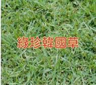 綠珍韓國草種子 【草種子】100公克/包 綠珍韓國草籽(闊葉)