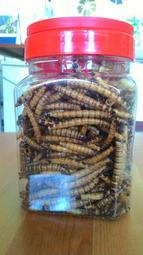 大麥蟲乾200g/300元