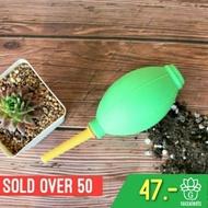 ส่งฟรี [ราคาถูก]ที่เป่าลม High Quality Air Blower G Succulents กุหลาบหินนำเข้า ไม้อวบน้ำ