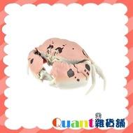 ∮Quant雜貨鋪∮┌日本扭蛋┐  BANDAI 螃蟹環保扭蛋 單售 04 逍遙饅頭蟹 可動 生物圖鑑 甲殼類第一彈 現貨 扭蛋