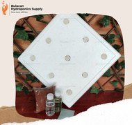 Hydroponics Starter Kit Basic Duo - 2 pcs Growbox Styro Box Total of 18 holes with Net Cups