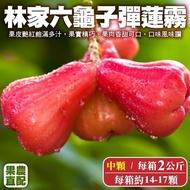【果農直配】六龜子彈蓮霧2kg/箱(中顆14-17入)