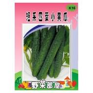 【野菜部屋~】K16 短系四葉小黃瓜種子8公克(約400顆種子) ,肉質鮮脆~