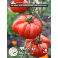 Tomato Costoluto Genovese Seeds (10 grains)
