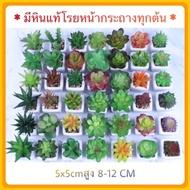 TRR_ต้นไม้ปลอม Cactus   กระบองเพชร ไม้อวบน้ำ กระถางเซลามิก ต้นไม้ประดิษฐ์  ตกแต่งบ้าน