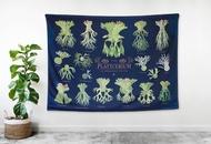 18品種鹿角蕨插畫圖鑑-掛布