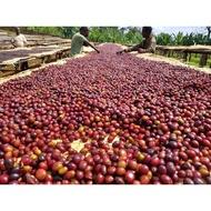 [卓武咖啡]衣索比亞 耶加雪菲 潔蒂普鎮 沃卡-薩卡羅村 水洗 G1