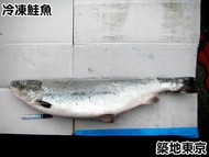 ☆築地東京☆【冷凍鮭魚整尾去頭,重量:7-8公斤,規格:大隻】