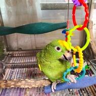 彩虹鸚鵡耐咬磨牙扣環