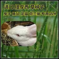 提摩西草種子貓尾草兔子豚鼠荷蘭豬龍貓進口多年生牧草