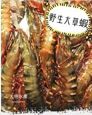 野生大草蝦2kg±10%/盒 新鮮食材 老饕首選 天然極品