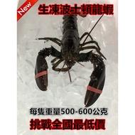 【舞鮮水產】冷凍波士頓龍蝦500~600g/ 烤肉 露營 團購 海鮮 肉品