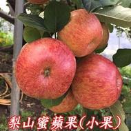 梨山蜜蘋果-6A10台斤,梨山蜜蘋果宅配,梨山蜜蘋果產期11-12月梨山蜜蘋果產季,梨山蜜蘋果園,梨山蜜蘋果價格,梨山蜜蘋果團購