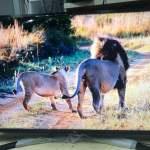 LG 43吋 43inch 43UN7400 4k 智能電視 smart tv