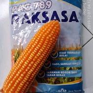 Pac 789 Raksasa