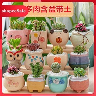 succulents Novice Succulents Combination Package Potted Succulents with Flower Pots with Soil Office Desktop Green Plant