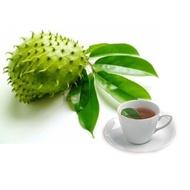 刺果番荔枝葉茶,最划算大包裝包,刺果番荔枝茶,刺果番荔枝粉 另有量販1kg裝