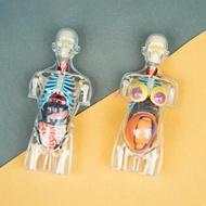4DMASTER益智拼裝拼插玩具人體器官4dmaster半身模型內臟拼裝模型