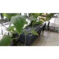 水耕蔬果用盆,陽台無土栽培花盆 水培蔬菜花卉綠植營養液 水耕設備種植槽箱
