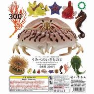 全新NTC海邊生物第二彈6款販售/奇譚 KITAN/異色版