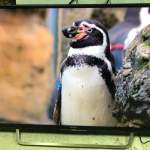 Sony 49吋 49inch KD-49X7000D 4k android 智能電視 smart tv