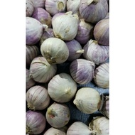 bawang putih tunggal /bawang jantan/ bawang lanang