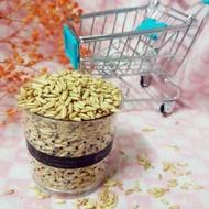 10克10元大麥草 小麥草種子 貓草種子 燕麥種子