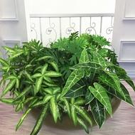 [花藝]仿真小綠植迷你款春芋葉仙芋斑紋葉 楓葉蕨植物墻  配材工程裝飾