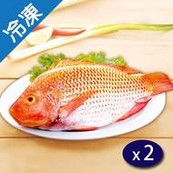 尼羅紅魚(500~600g/尾)X2