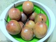 家坤種子專賣店:蜜糖百香果種子 滿天星百香果種子