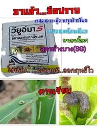 อีมาเมกติน เบนโซเอต 5% (SG) อิมา อีมา อิมาเมกติน อิมาเม็กติน สารกำจัดแมลง ยาฆ่าหนอนชนิดต่าง ๆ หนอนม้วนใบ ในข้าว หนอนเจาะ หนอนกระทู้ข้าวโพด พืชผัก ไม้ดอก ดาวเรือง และสวน ( 50 กรัม )