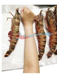 【九江水產】野生手臂蝦(南非海草蝦)---蝦中的焦點