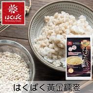 【HAKUBAKU黃金大地】黃金糯麥 600g 50gx12袋入 日本話題商品 銷售人氣NO.1品牌   日本進口美食