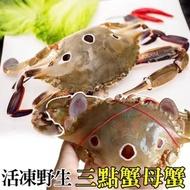 【買6送6】活凍野生三點蟹-母蟹(12隻/每隻約100-150g)