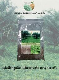 เมล็ดพืชคลุมดิน -  เมล็ดเพอราเรีย บรรจุ 100 กรัม Cover crop seed - Pueraria seeds 100 grams