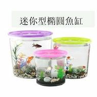 【迷你橢圓形小魚缸-透明PS-小號-4套/組】半透明彩蓋星形投料口,內景2棵水草/1包珊瑚石/1個貝殼-5101003