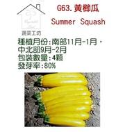 【蔬菜工坊】G63.黃櫛種子(阿滿.夏南瓜.節瓜.嫩南瓜.美國南瓜)
