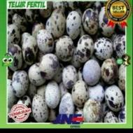 100% Quail Fertil Egg Anti-fall