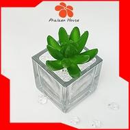 ไม้อวบน้ำปลอม กุหลาบหินเขียวสดนิ้วมือ / แคคตัส (Cactus) - เฉพาะต้นไม้ไม่รวมแจกัน