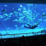 屏東墾丁 海洋生物博物館門票 全票 海生館門票【蝦幣回饋】