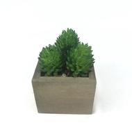 ลดราคาพิเศษ หัวแคคตัสปลอม Set 3 หัว   (ไม่รวมกระถาง)ไม้อวบน้ำปลอม พืชฉ่ำน้ำ สำหรับจัดสวนจิ๋ว สวนถาด ราคาถูก โปรโมชั่นพิเศษ กระถางเซรามิค