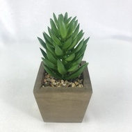 ไม้อวบน้ำปลอม PL015-11 หัวพืชอวบน้ำ (ไม่รวมกระถาง) ต้นไม้ประดิษฐ์ หัวแคคตัส สำหรับประดับตกแต่งสวนจิ๋ว สวนถาด