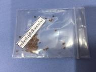 เมล็ดพันธุ์ต้นฟ้าทะลายโจร พืชสมุนไพร ฟ้าทลายโจร ปราศจากสารเคมี organic 100 เมล็ดพันธุ์